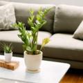 Nhà đẹp - 6 cách làm mới phòng khách ít tốn kém