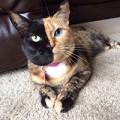 Xem & Đọc - Cô mèo nổi tiếng thế giới vì có 2 gương mặt