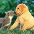 Sức khỏe - Phòng ngừa chó, mèo gây bệnh cho người