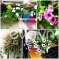 Nhà đẹp - Thăm vườn hoa ban công tuyệt đẹp ở Cầu Giấy