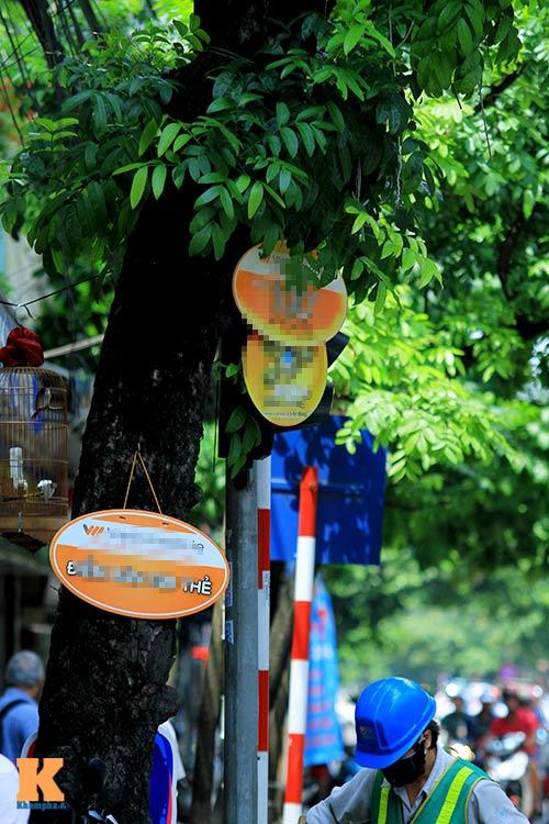 'Cây quảng cáo' miễn phí ở Hà Nội-9