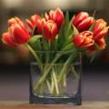 Nhà đẹp - Mẹo cắm hoa siêu dễ với băng dính