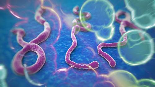bung phat dich ebola, 729 nguoi tu vong o tay phi - 2