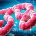 Tin tức - Đại dịch Ebola bùng phát là do nghèo khổ, y đức