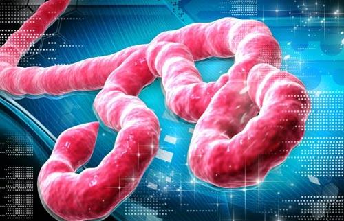 """khung bo bang """"bom ban"""" ebola: ac mong toan cau? (ky 2) - 1"""
