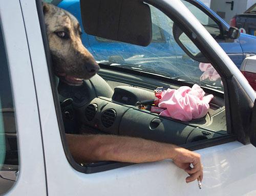 Hài hước những bức ảnh chụp chó trùng hợp ngẫu nhiên-8
