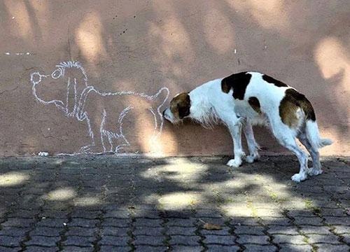 Hài hước những bức ảnh chụp chó trùng hợp ngẫu nhiên-10