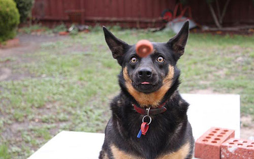 Hài hước những bức ảnh chụp chó trùng hợp ngẫu nhiên-14