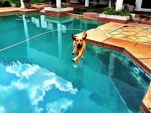 Hài hước những bức ảnh chụp chó trùng hợp ngẫu nhiên-16
