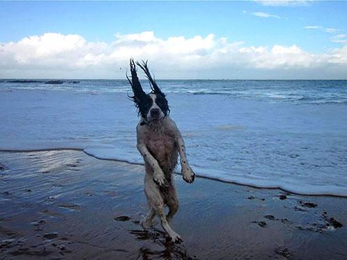 Hài hước những bức ảnh chụp chó trùng hợp ngẫu nhiên-3