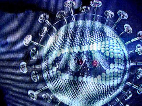 10 loại virus gây bệnh nguy hiểm nhất thế giới-5