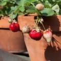 Nhà đẹp - Trồng vườn ban công: 10 bí quyết của Marie Viljoen