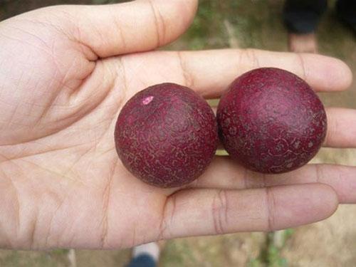 Khi trái cây có màu khác với chúng ta thường thấy-1