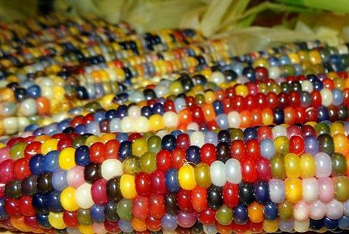 Khi trái cây có màu khác với chúng ta thường thấy-3