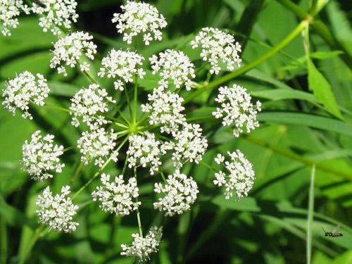 Hoa, cây cảnh chứa độc đe dọa sức khỏe-3