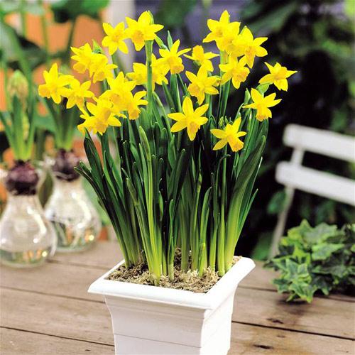 Hoa, cây cảnh chứa độc đe dọa sức khỏe-4