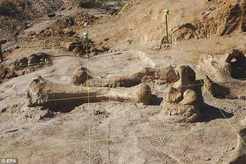 Phát hiện bộ xương khổng lồ của sinh vật thời kỷ băng hà-3