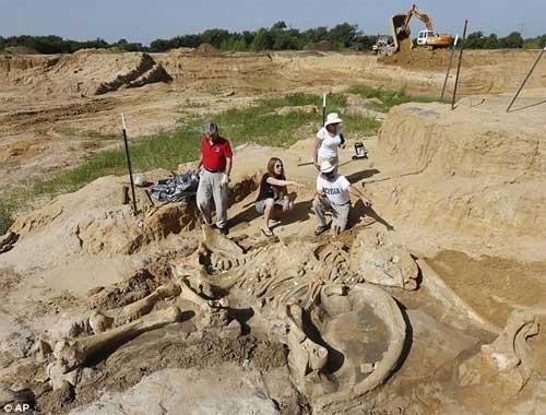 Phát hiện bộ xương khổng lồ của sinh vật thời kỷ băng hà-5