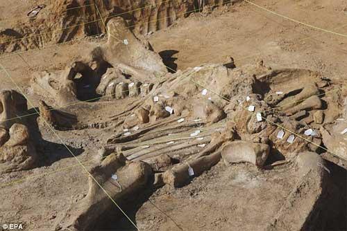 Phát hiện bộ xương khổng lồ của sinh vật thời kỷ băng hà-6