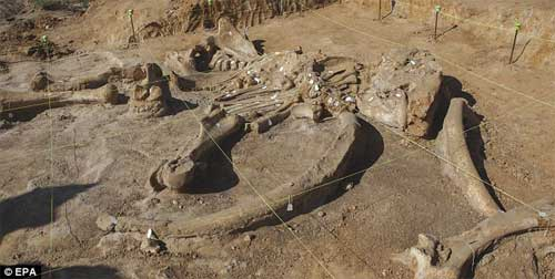 Phát hiện bộ xương khổng lồ của sinh vật thời kỷ băng hà-7