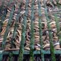 Mua sắm - Giá cả - Kiếm 300 triệu/tháng nhờ nuôi lươn không bùn ở Sài Gòn