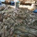 Tin tức - Xưởng tẩy trắng cá mực bằng hóa chất sát sông Hồng