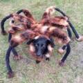 """Clip Eva - Video chú """"chó nhện"""" hút hơn 60 triệu lượt xem"""