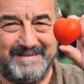 Tin tức - Bất ngờ với quả cà chua hình trái tim trong vườn