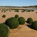 Tin tức - Hàng ngàn vật lạ như 'trứng người ngoài hành tinh'?