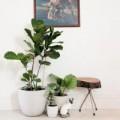 Nhà đẹp - 10 cây xanh tươi tắn, dễ sống trong nhà