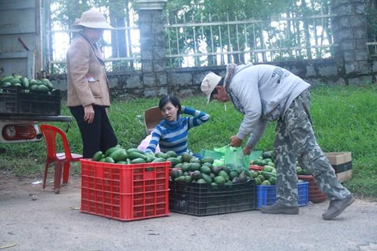 Bơ Lâm Đồng được giá, nông dân mừng ra mặt-1