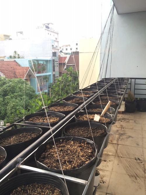 tp.hcm: van phong cho nhan vien thoa thue trong rau sach - 1