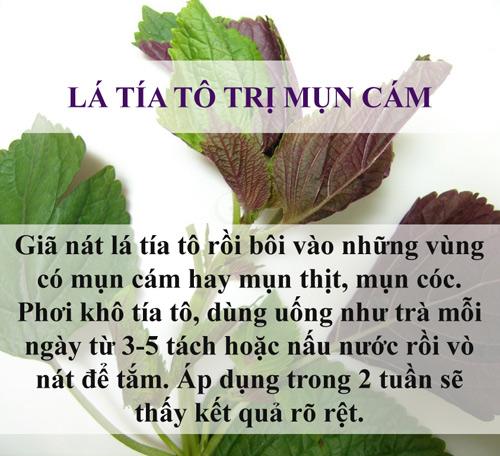 tri sach mun chi mat vai nghin dong bang la cay - 3