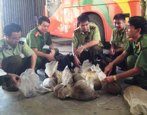 xe khach cho 500kg noi tang thoi va dong vat hoang da - 2