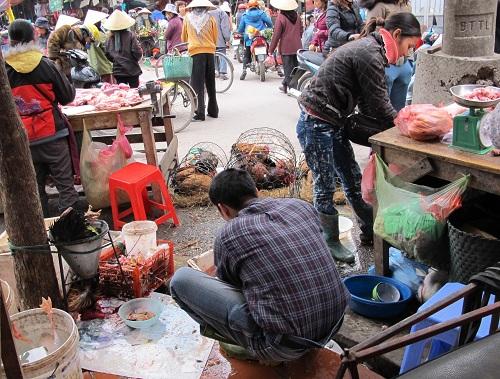Xuất hiện thêm một ổ dịch cúm A(H5N1) ở Ninh Thuận-1