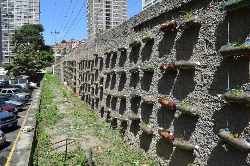 Dân thành phố quay lại nuôi gà, trồng rau tại nhà để tránh đói-4