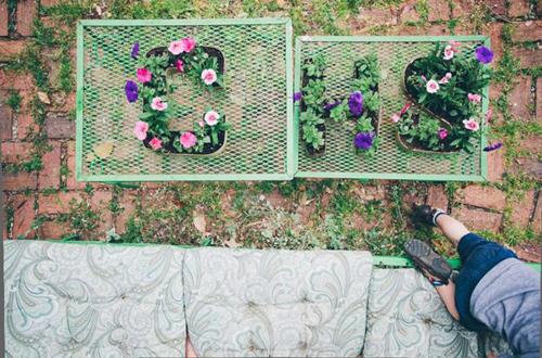 16 loại chậu cây phù hợp với mọi kiểu sân vườn-11