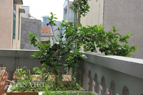 Top 9 loại cây ăn quả dễ trồng ở sân vườn nhà phố-13