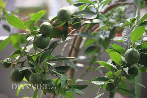 Top 9 loại cây ăn quả dễ trồng ở sân vườn nhà phố-14