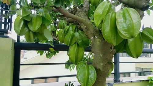 Top 9 loại cây ăn quả dễ trồng ở sân vườn nhà phố-2