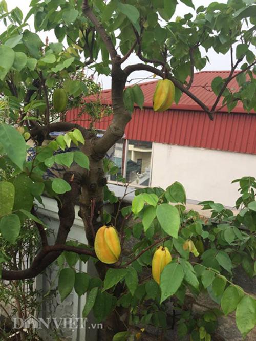 Top 9 loại cây ăn quả dễ trồng ở sân vườn nhà phố-3