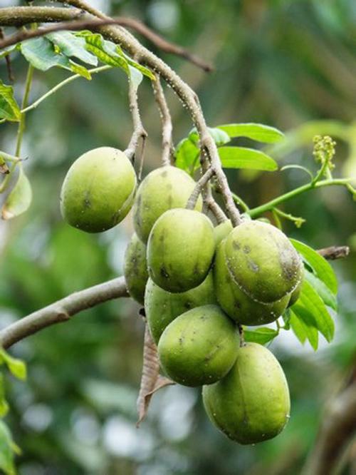 Top 9 loại cây ăn quả dễ trồng ở sân vườn nhà phố-5