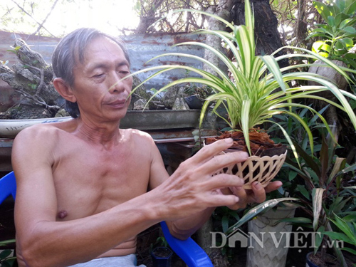 "vuon ""thuong uyen"" kieng treo sinh thai tu trai dua kho - 10"