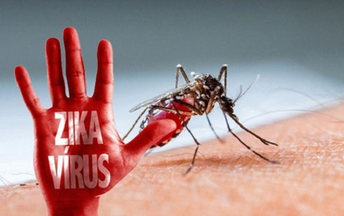 tp. hcm khan truong phong benh do vi rut zika khi mot nguoi duc bi nhiem - 1