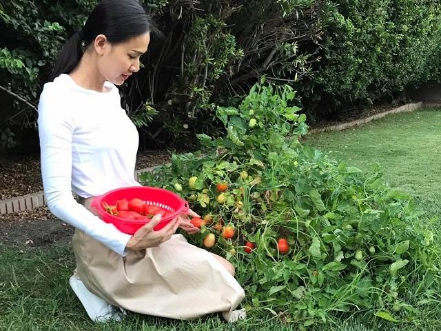 Thích mê vườn rau trái ăn mãi không hết của hoa hậu Dương Mỹ Linh trên đất Mỹ