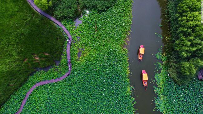 Tảo Trang, Trung Quốc: Các công viên ngập nước Hồng Hà ở thành phố Tảo Trang gây ấn tượng với cánh đồng hoa sen vào mùa hè.