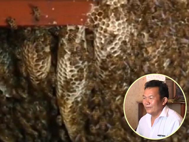 Cả gia đình làm giàu nhờ tổ ong khổng lồ ở chung trong phòng khách suốt 12 năm