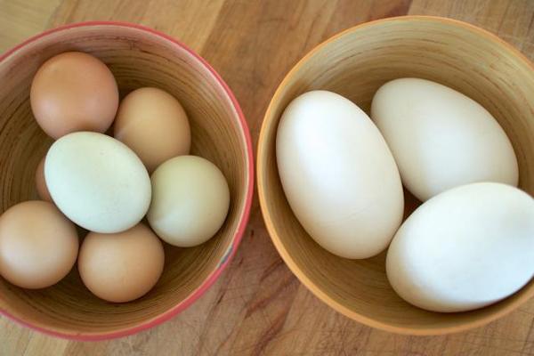 Mẹ bầu ăn trứng ngỗng thế nào để nạp dưỡng chất tốt nhất? - 1