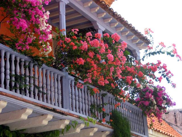 Muốn nhà nổi nhất phố, đừng bỏ qua cách trồng hoa giấy rực rỡ trên ban công