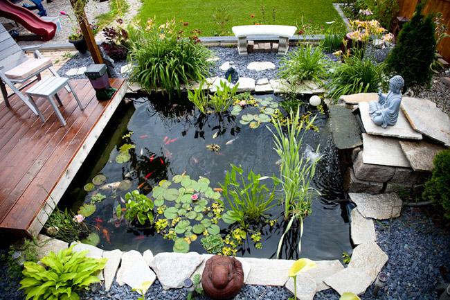 Hồ cá Koi làý tưởng thiết kế tuyệt vời cho những ngôi nhà có khuôn viên sân vườn rộng rãi, đem đến sự sang trọng, sinh động vàmới mẻ chokhông gian sống.